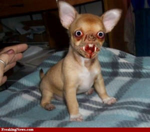 ugly-mean-dog-26957